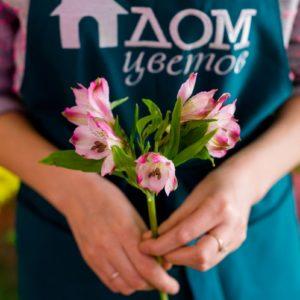 Альстромерия нежно-розовая