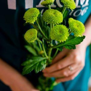 "Хризантема ""feeling green"""