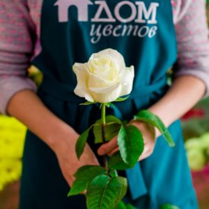 Роза белая 60см