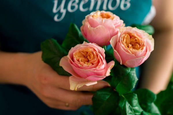 """Роза пионовидная """"Вувузелла"""""""