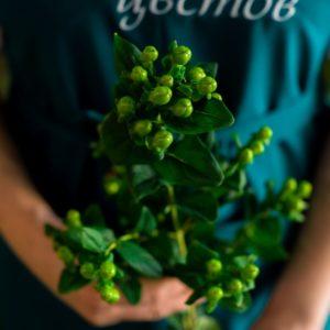 Гиперикум зеленый