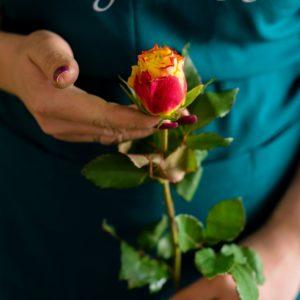 Мини роза желтая