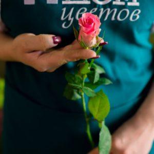 Мини роза розовая